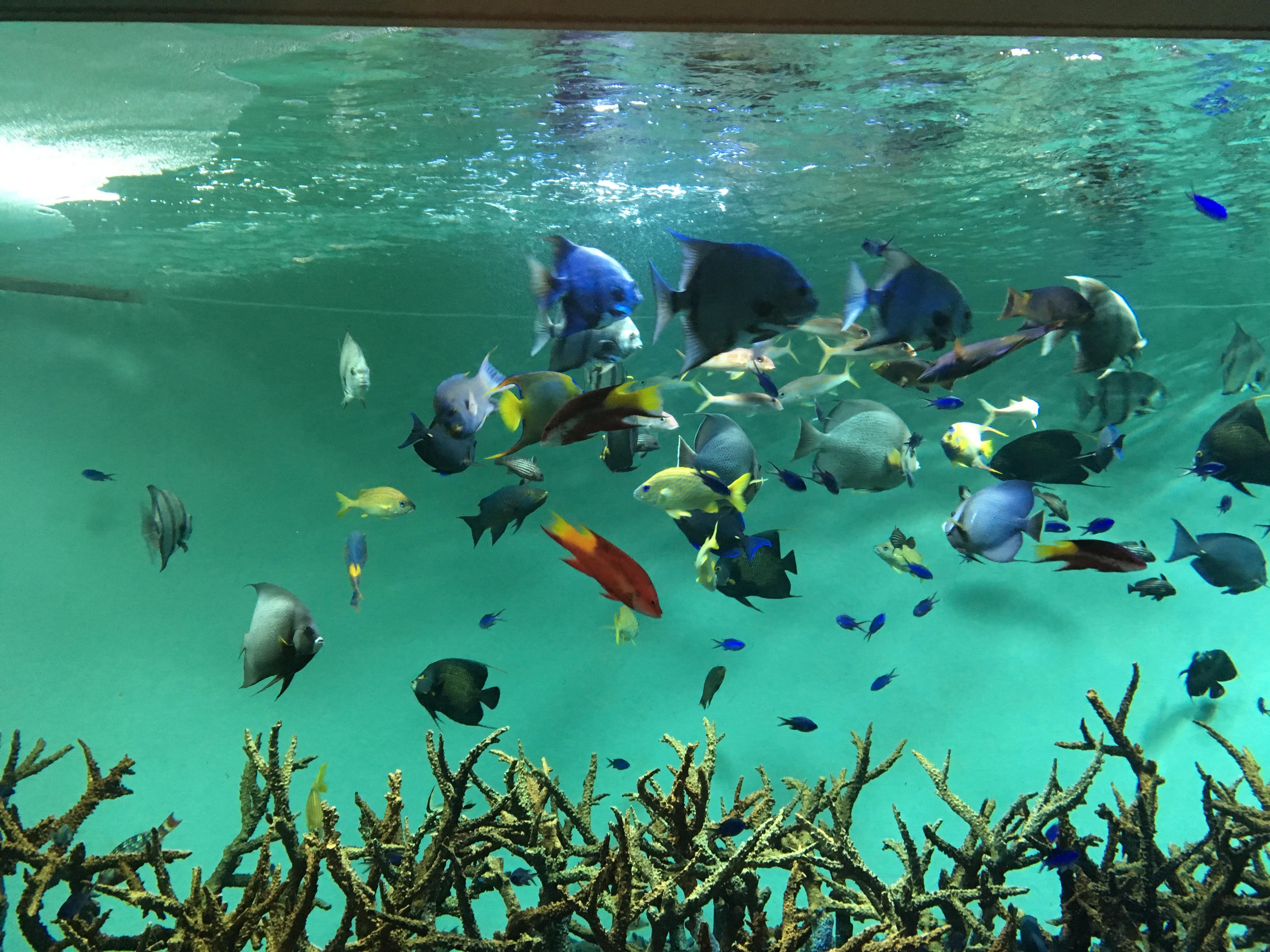 30代40代 葛西臨海水族館出会い巡り散策