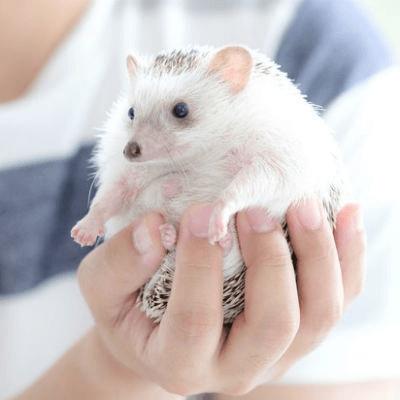 《動物カフェコン♥ハリネズミ編》動物好きの優しい方大集合♡
