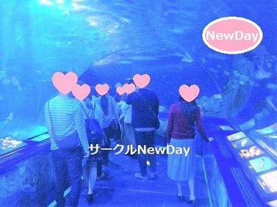★11/16 水族館コンin新江の島水族館 ★