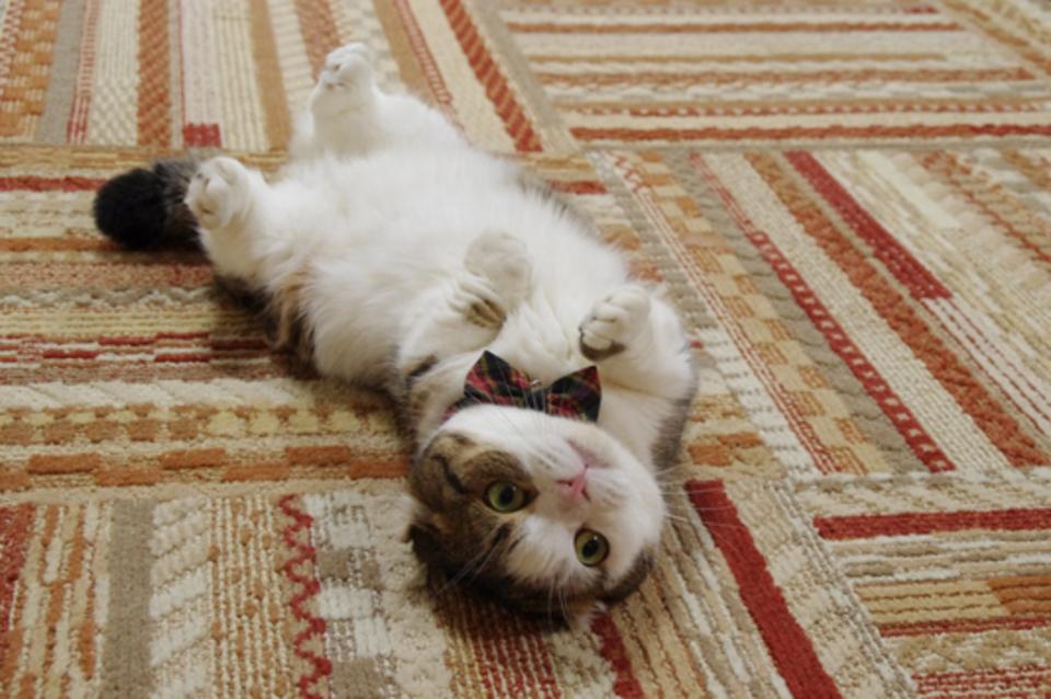 10月20日 横浜ニャンコン◆猫カフェ完全貸切!動物好きな方と出会える◆趣味コン